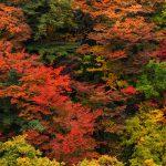 千畳敷カールの紅葉狩り