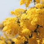 3月の花粉症予測