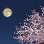 4月の満月はPink Moon