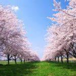 桜満開!ご近所の方々と友人と仲間とお花見だ~!