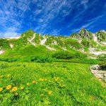 夏の絶景へ「登山・ハイキング」花々が咲きほこる 人気ランキング